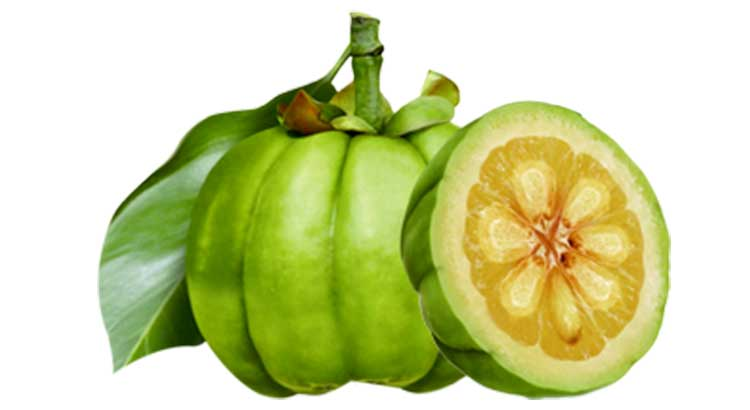 Garcinia-cambogia-in-the-philippines